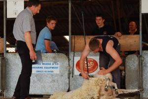 Новозеландские фермеры предлагают сделать стрижку овец официальным спортивным соревнованием