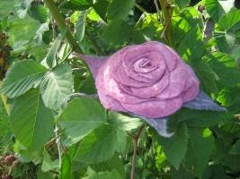 Роза «Малиновый сорбет». Фото мастер-класс по мокрому валянию.