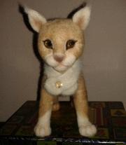 Лесной кот Амур