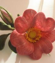 Цвет шиповника