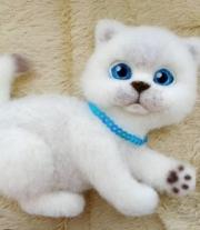 Котик-магнит мастера Анастасия