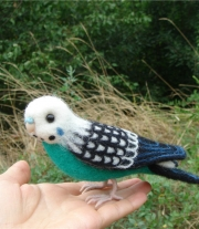 Попугай мятного цвета