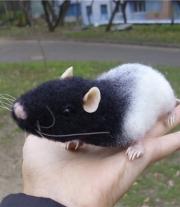 Крыса Лара
