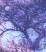 Топ, джемпер ′Отражение. Сказочный лес′