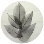 скелетированные листья черные