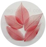 скелетированные листья красные
