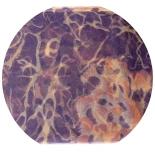 шарфы шифоновые цветные 110см*175см шелковый шарф 0033