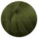 зелёный мох