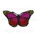 термонаклейка бабочка 02